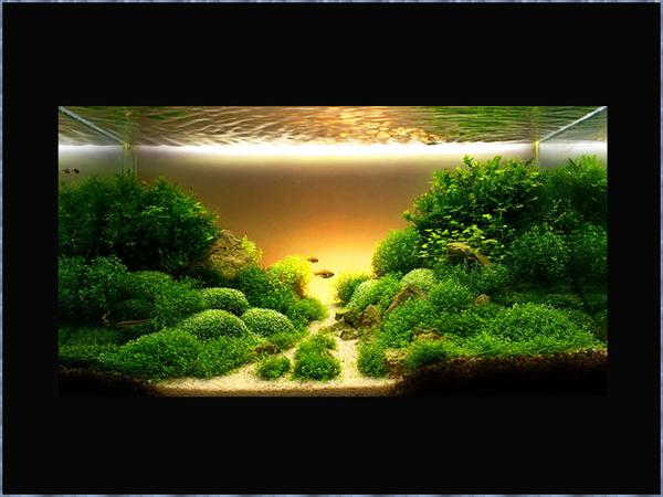 пресноводные рыбы фото и названия