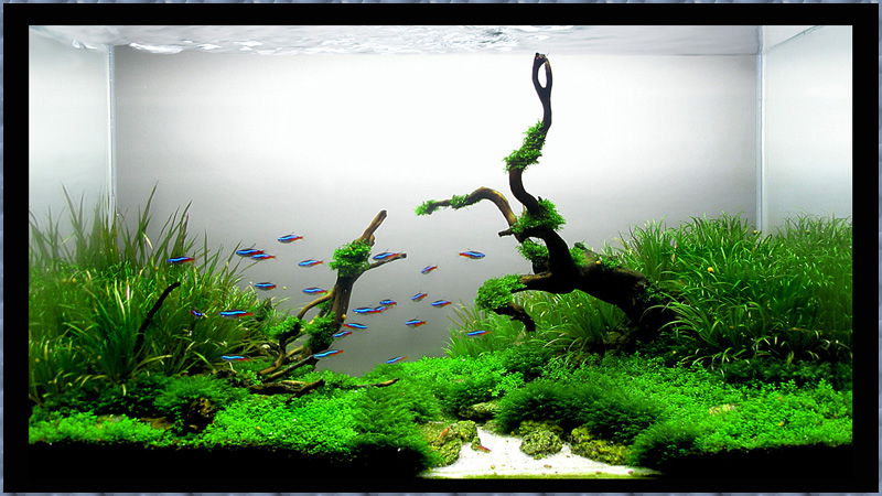 марки используют запуск аквариума с растениями видео важно